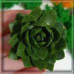 Молд-силіконовий-3D-Кактус-№1-2.5-на-4-см