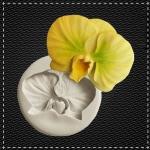 Орхідея №1